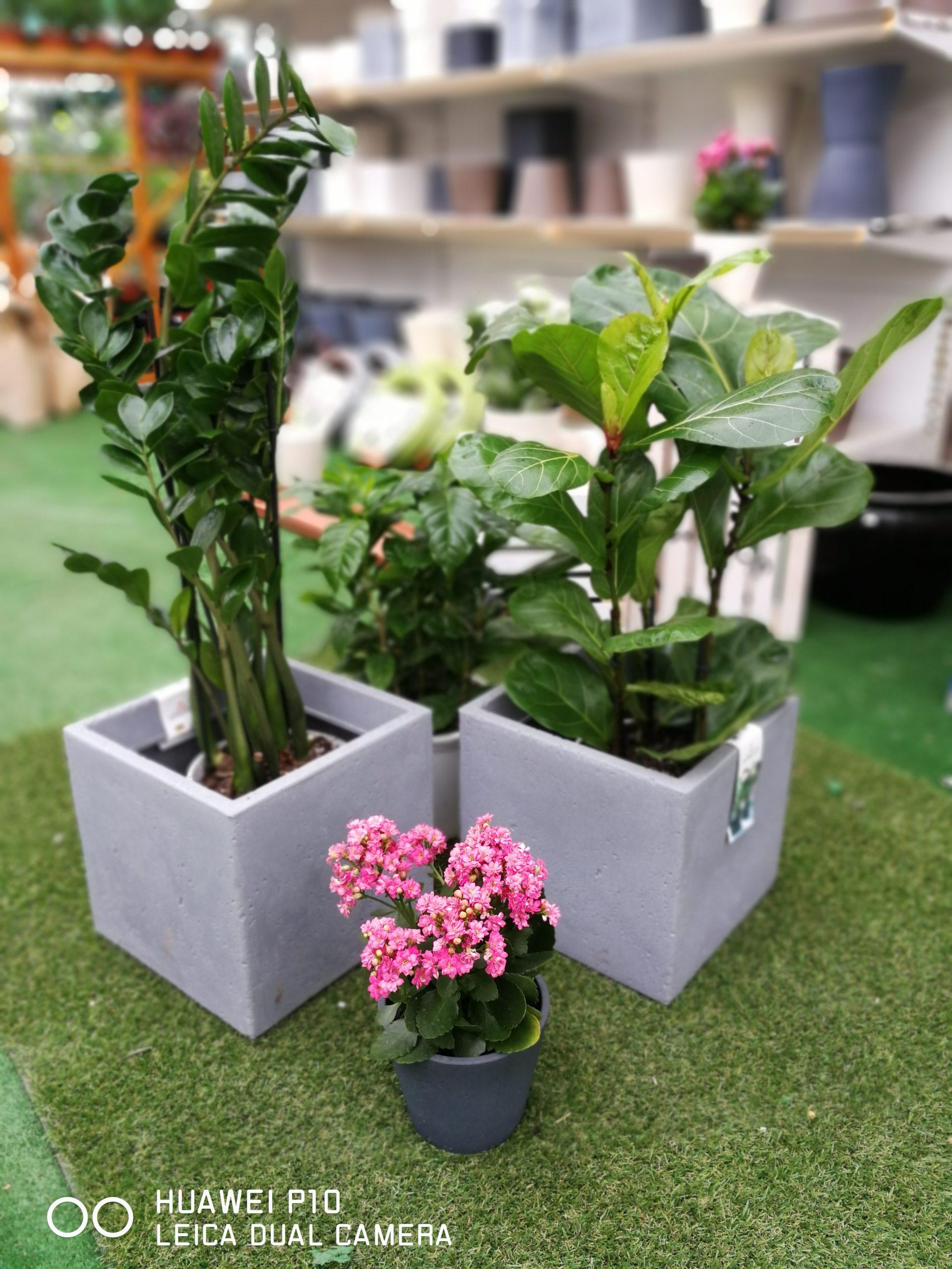 Πόσες φορές πρέπει να πούμε ότι τα φυτά εσωτερικού χώρου είναι η υπέρτατη τάση της χρονιάς! Άλλωστε, υπάρχει κανένας χώρος τους τελευταίους μήνες που να έχεις δει και να μην είναι κατάμεστος στη… βλάστηση